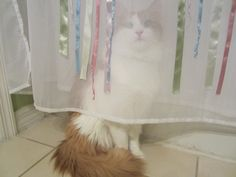 """""""No one will find me behind my curtain of invisibility."""""""