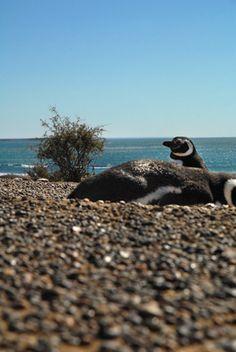 Puerto Madryn | METRO #189 | Ago 2014