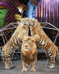 Yes/No Films: GIVEAWAY: Ringling Bros. and Barnum & Bailey presents Dragons at the Palace (Detroit area), ends Ringling Brothers Circus, Ringling Circus, Circus Tickets, Barnum Bailey Circus, Circus Train, Circo Vintage, Circus Acts, Detroit Area, Big Top
