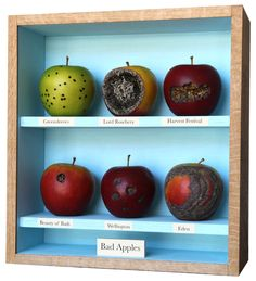 """For his most recent work, artist John Dilnot created a series of boxes containing rows of diseased """"bad"""" apples neatly arranged on shelves. At first glance the boxes suggests a nostalgic feeling for a lost Eden, but on closer inspection they reveals a more ambiguous intention. The artist has relished recreating these rotting fruits and in so doing subverts the idea that decay is """"bad"""". As a result, Bad Apples becomes a humorous and liberating musing on the inevitability of mortality and…"""