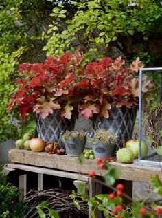 Garden Junk, Garden Art, Container Plants, Container Gardening, Amazing Gardens, Beautiful Gardens, Fall Containers, Cottage In The Woods, Dere