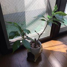 Pinを追加しました!/桜の枝がこんなことになった。観察すると萎れ始めているが大丈夫だろうか。ちゃんと水と栄養をあげているが