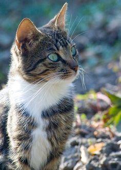 llbwwb:    Hello Dear Friends:) (via *** - Раздел животные - Фотографии на Фото.Сайте - Photosight.ru)