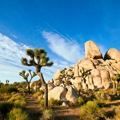 The best Joshua Tree sites for cool-season camping, plus nearby hotels and restaurants for a more well-heeled experience