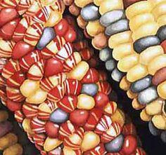 Kevan Aponte   WATERCOLOR Food Art, A Food, Rainbow Corn, Glass Gem Corn, Popcorn Seeds, Corn Maize, Sleepover Food, Fruit Photography, Fruits And Veggies