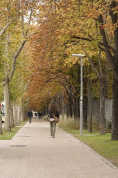 Mi otoño
