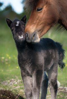 Mother's Pride. #horses #mares #foals #pets #animals