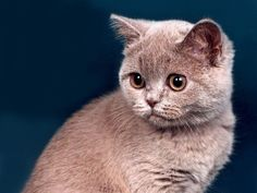 CUTE PICS PARADE | Cute baby kittens pictures (2pics).