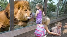 Kids and wild animals At The Mountain Zoo: Fun Lion and Elephant with kids Thumbnail for this video We are going for the mountain to see the wild animal. Funny Cartoons For Kids, Cartoon Kids, Funny Kids, Funny Cat Compilation, Funny Cat Videos, Kittens Playing, Cats And Kittens, Cute Little Animals, Adorable Animals