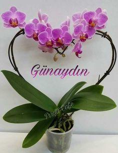 Günaydın resimleri – Çok İyi Abi Good Morning Messages, Decoration, Orchids, Wreaths, Hipster Stuff, Flowers, Good Morning Wishes, Decor, Door Wreaths