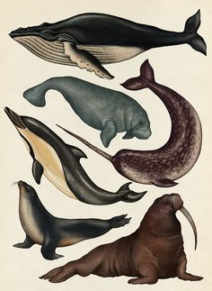 Water mammals - Animalium