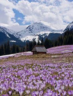 Les plus beaux sommets enneiges du mondeLes Tatras Pologne