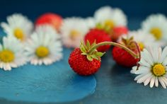 wild-strawberry-and-chamomile-white-flower-wallpaper-1920x1200.jpg (1920×1200)