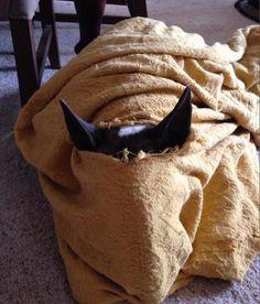 #Bull #Terrier playing hide-and-seek. Nice try!