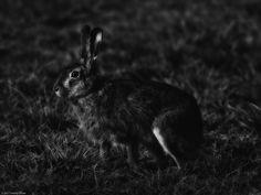 heinz-effner-fine-art-wildlife-photography posted a photo:  Heinz Effner Fine Art Photography - Wildlife photography in black and white - Wildtierfotografie in schwarzweiß - La photographie de la faune en noir et blanc!