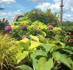 GALLERY - Burlington Garden Center Garden, Plants, Garden Center, Landscape, Garden Signs, Landscape Design