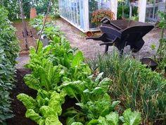 Aby bola záhrada zdravá a bez škodcov, je dobré vedieť, ktoré rastliny sa znášajú a pomáhajú si, a ktoré nie. Volá sa to alelopatia a pár info nájdete aj tu.