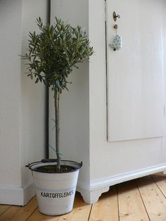 Olive Tree, Metal Bucket, Kitchen. White, Grey, Black, Chippy, Shabby Chic, Whitewashed, Cottage, French Country, Rustic, Swedish decor Idea. ***Pinned by oldattic***