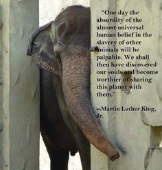 Martin Luther King Jr quote Elephant