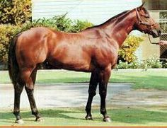 Fast Jet, b, h, 68, 31-9-3-6 $262,180 SI-98 Jet Deck X Miss Breeze Bar X Breeze Bar, Sire of Fast Copy SI-103 $37,194 Dam of Heza Fast Man, Champion 3 yo Colt. Jet View SI-104 $328,627 1980 Champion Racing 2yo. Miss Fast Chick SI-99 $45,510 Dam of Runaway Winner, Champion Sire.