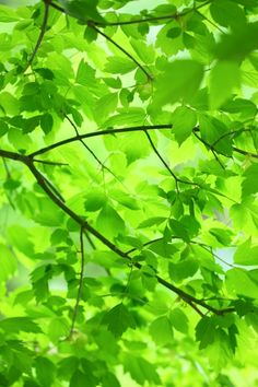 """Photo """"Verde Green Leaves and Branches"""" by Pink Sherbet Photography #OGQ_Backgrounds"""