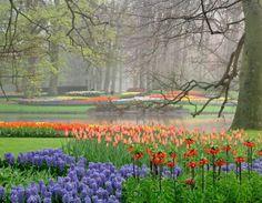 springtime around the world | Keukenhof Flower Parade