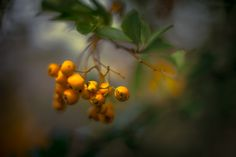 https://flic.kr/p/MEcDiv | Autumn Colors | Pentacon 50 mm F 1.8