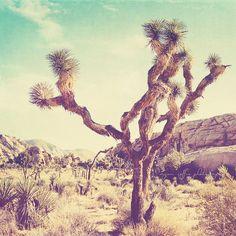 Joshua Tree national park photo, California travel, Palm Springs desert photography, nature, vintage blue yellow, 5x5 print
