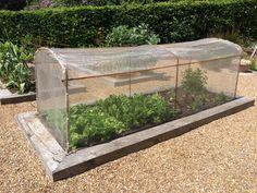 Raspberry Canes, Fruit Cage, Fruits And Vegetables, Terrarium, Asparagus, Garden, Kitchen, Fruits And Veggies, Terrariums