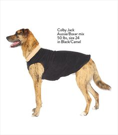 Gold Paw Duluth Double Cirrus Fleece Dog Sweater