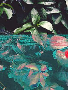 Glitch Nature / Nicolás Rocha