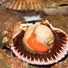 Finding a scallop recipe that is garlic and onion free isn't all that easy so here's our option to keep these delicious shellfish FODMAP-friendly. Frozen Scallops, Fresh Scallops, How To Prepare Scallops, Coquille Saint Jacques, Scallop Recipes, Seafood Restaurant, Eating Raw, Low Fodmap, Food To Make