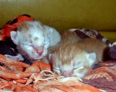 Il-Trafiletto: Il gatto va amato, ma non viziato!