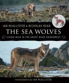 "Read ""The Sea Wolves Living Wild in the Great Bear Rainforest"" by Ian McAllister available from Rakuten Kobo. The Sea Wolves sets out to disprove the notion of ""the Big Bad Wolf,"" especially as it is applied to coastal w. Wolf Population, Wolf Face, Apex Predator, Lost In The Woods, Marine Environment, Wild Wolf, Big Bad Wolf, Fiction And Nonfiction, Sea Creatures"