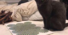 Δείτε πώς αντιδρά αυτή η γάτα σε μια οφθαλμαπάτη (Video)