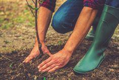 Zahradničení ve třetím květnovém týdnu: setí a sázení po zmrzlých - Okrasná zahrada