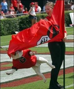 Uga hahah! ~ Check this out too ~ RollTideWarEagle.com sports stories that inform and entertain and Train Deck to learn rules of the game you love. #Collegefootball Let us know what you think. #UGA #Georgiabulldogs