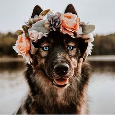 Beautiful Flower Crowns For The Most Majestic Animals Beautiful Flower Crowns For The Most Majestic Animals Pretty Animals, Cute Baby Animals, Animals Beautiful, Animals And Pets, Funny Animals, Most Beautiful Dogs, Nature Animals, Wild Animals, Beautiful Creatures