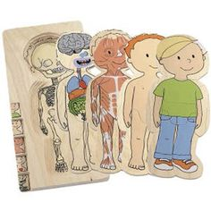 The 5 layer body puzzle familiarizes children with their own bodies as well as others'. Each body system and puzzle layer consists of 7 pieces. The 28 pieces help to complete the nervous and digestive, muscular, skin and clothed layers. Made of wood coated with safe, non-toxic finishes. Dimensions: 11.5 x 5.5 inches.