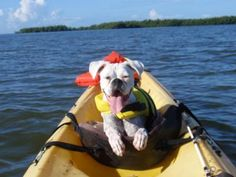 Boxer - Kayaking in the Everglades!