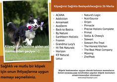 Back To Basics, Dogs, Nature, Naturaleza, Nature Illustration, Outdoors, Pet Dogs, Dog, Natural