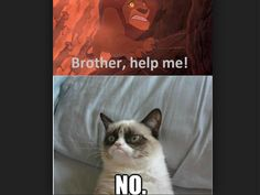 LONG LIVE THE GRUMPY CAT Edit: hOLY SHAMOLY THANKS FOR ALL THE REPINS