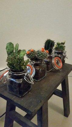 Mini cactus in mini weckpot