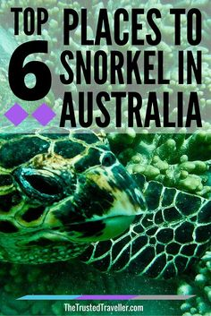Top 6 Places to Snorkel in Australia Australia is surrounded by aquatic sanctuaries teeming with marine life. Here are the top 6 places to snorkel in Australia. Turtle at Turquoise Bay - Top 6 Places To Snorkel In Australia - The Trusted Traveller Brisbane, Melbourne, Perth, Australia Travel Guide, Visit Australia, Australia Trip, Western Australia, Australia Honeymoon, Sidney Australia