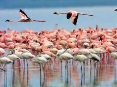 104.RIA FORMOSA.wmv- Flamingos