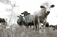 Photographic art by Therina Groenewald Interior Photography, Professional Photography, Monochrome, Art Gallery, Animals, Image, Animales, Art Museum, Monochrome Painting