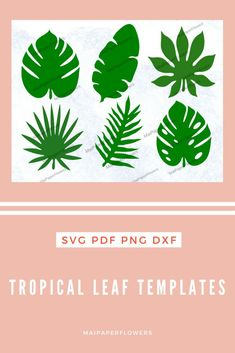 This set of paper flower leaf templates is very charming for your paper flowers diy projects. It is about tropical jungle theme. They can be used with printers, Cricut, Silhouette. Click through for more views and to find it at affordable cost!!! #paperflowerleaftemplate #paperflowerleaf #jungleleaftemplatecricut #paperflowerleafcricut #leaftemplatetropical #leaftemplateprintable #leaftemplatecricut #paperflowersdiy