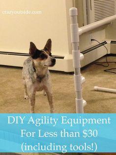 DIY Agility Equipment Set