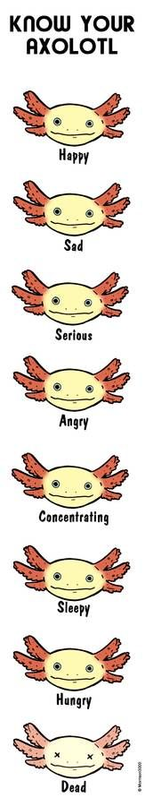 Why axolotls are awesome by Loony-Madness on DeviantArt