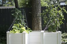 The African Keyhole Garden consists of a raised garden bed with a unique compost tunnel that gobbles up your kitchen scraps and provides constant nutrients to the growing vegetables. Garden Compost, Vegetable Garden, Raised Garden Beds, Growing Vegetables, African, Layout, Patio, Outdoor Decor, Plants